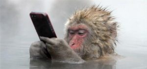 monkey mobile phone bath hot spring