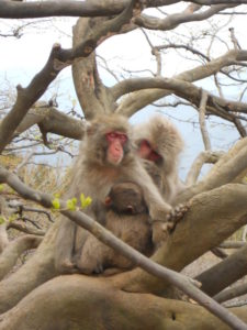 Musings VII: On Monkeys in Japanese Culture  - Japan Powered
