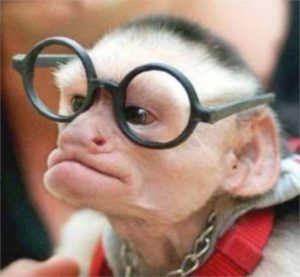 baby monkey glasses face funny
