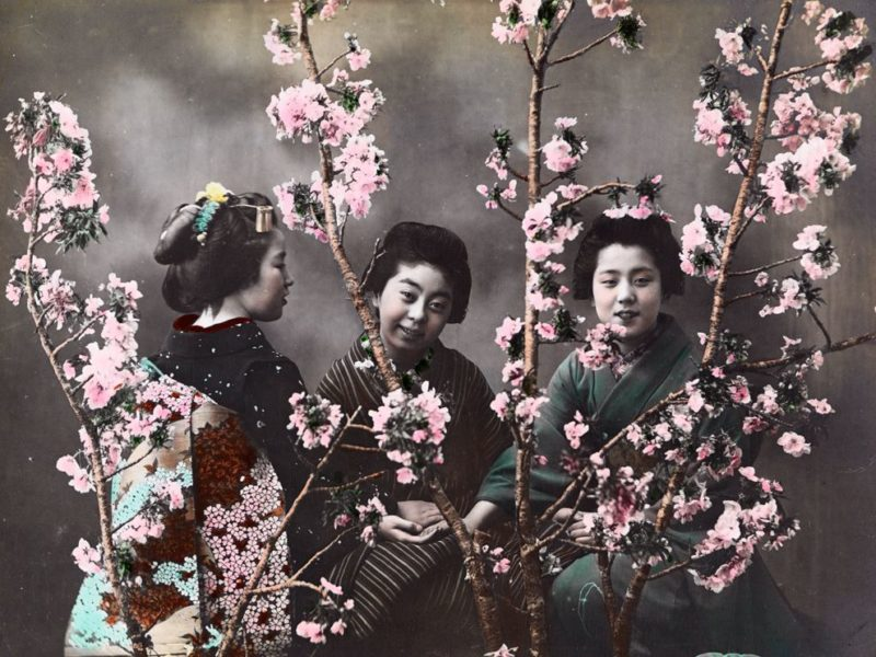 Japanese women with cherry blossoms