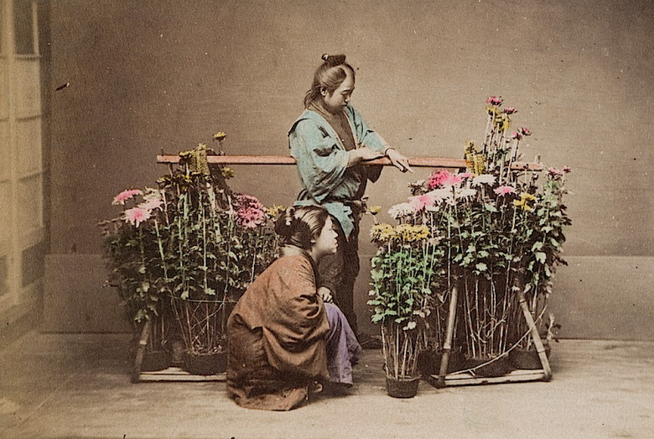 chrysanthemum seller in Japan c. 1890