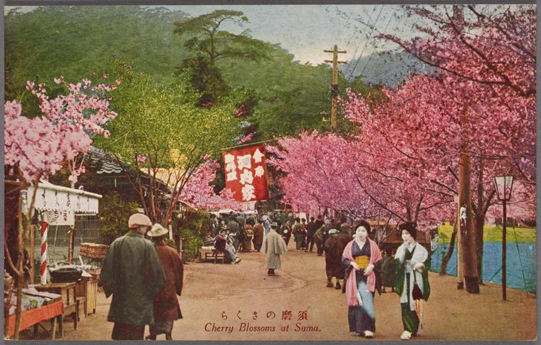Cherry blossom at Suma